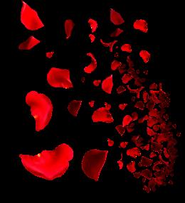 红色玫瑰花瓣