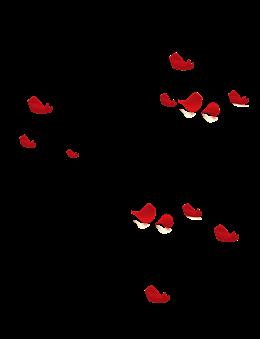 玫瑰花瓣洒落图片