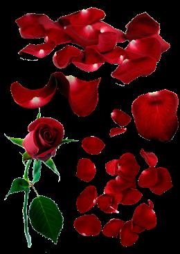 红玫瑰花瓣矢量图片