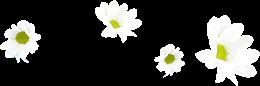 白色花朵漂浮