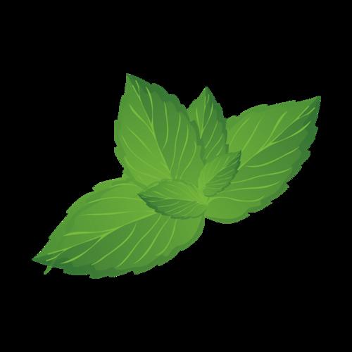 绿色薄荷叶片