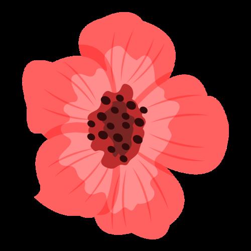 盛开的红色花朵花苞
