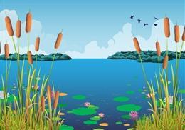 夏日池塘背景图