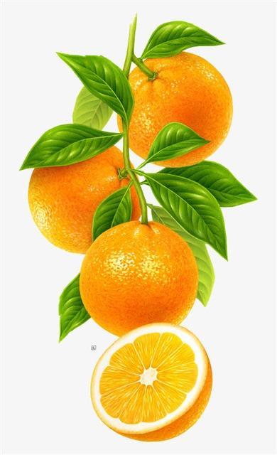 一组橙子水果