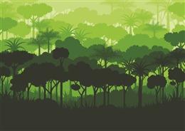夏日茂盛森林背景图