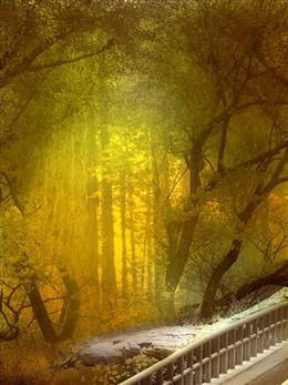 林间风景图片