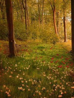 森林风景图片