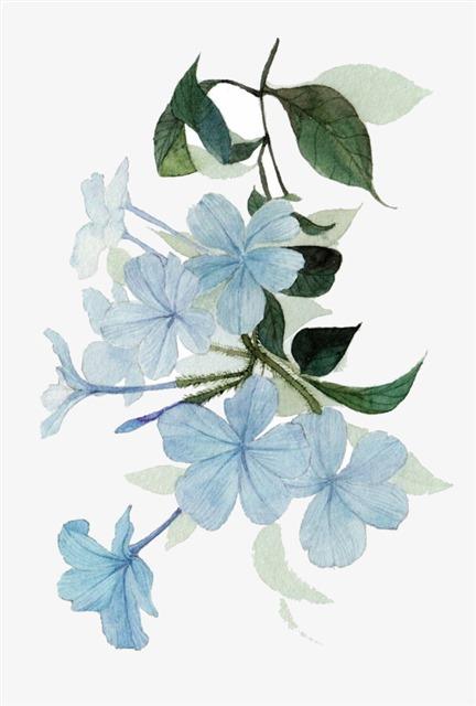 蓝色花卉国画图片
