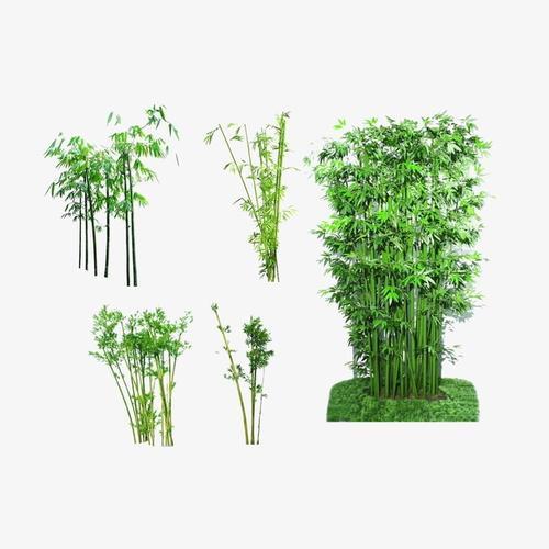 竹子竹林矢量图