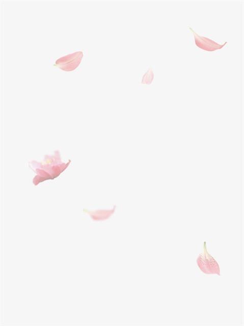 漂浮元素粉色花瓣