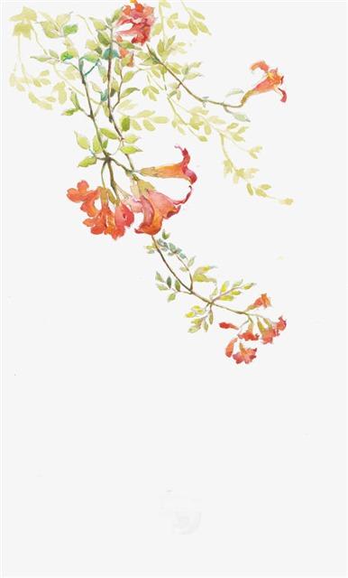 水彩手绘石榴花