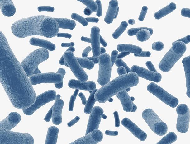 大肠杆菌显微镜观察图