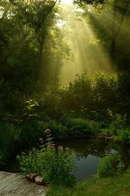 阳光透过森林图片