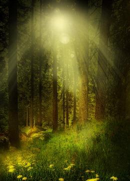 森林阳光插画