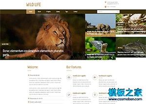 野生动物园网站模板
