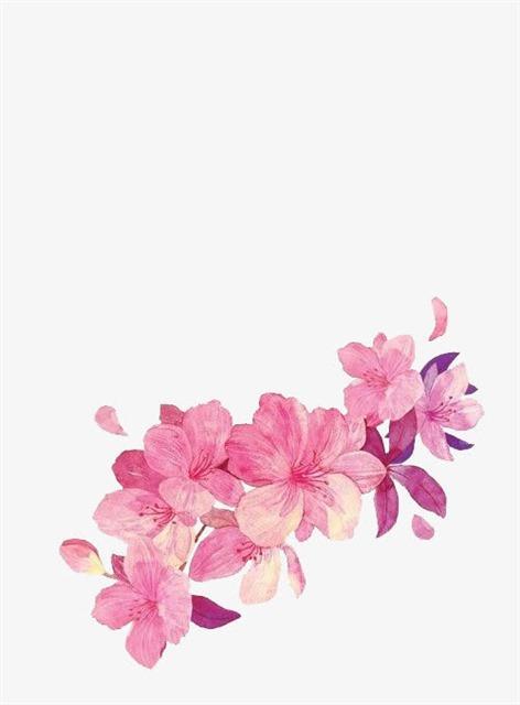 粉色小花水彩画