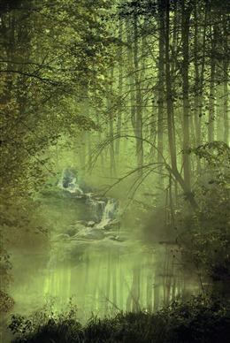 清晨森林图片