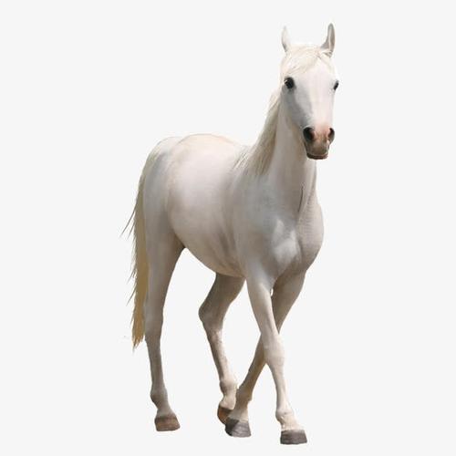 白马高清免抠图