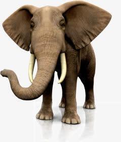 大象高清矢量图