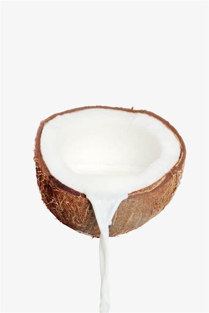 椰子摄影图