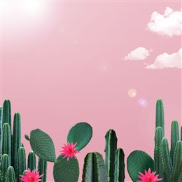 粉色仙人掌背景图
