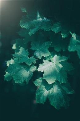 黑色绿叶植物背景