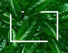 INS风绿色植物叶子背景