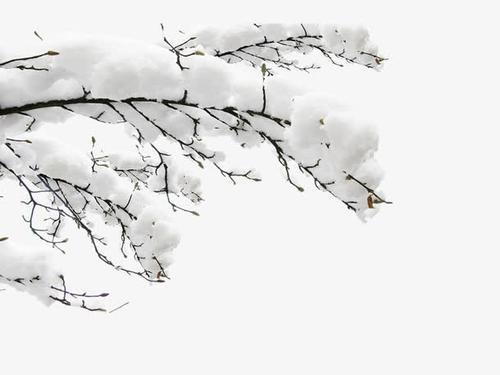 雪松雾凇背景装饰图