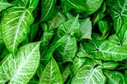 植物绿叶高清摄影背景图片