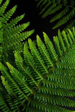 文艺清新绿色植物背景