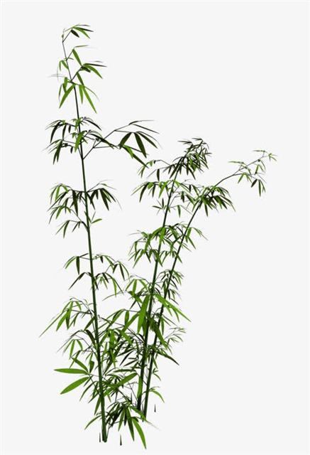 绿色竹子竹叶图片