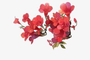 古风手绘花朵