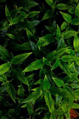 清新大自然植物背景
