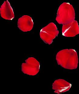 红色花瓣漂浮免抠图