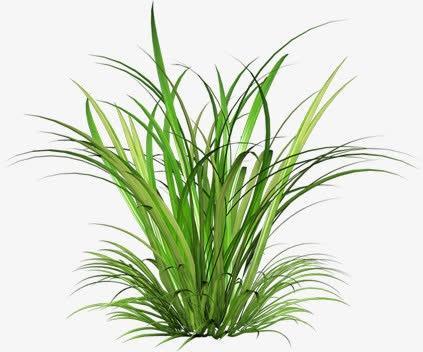 绿色鲜草素材
