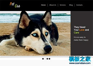 宠物狗狗俱乐部网站模板