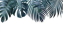 清新文艺白底植物背景