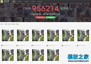 宠物秀主页html5模板