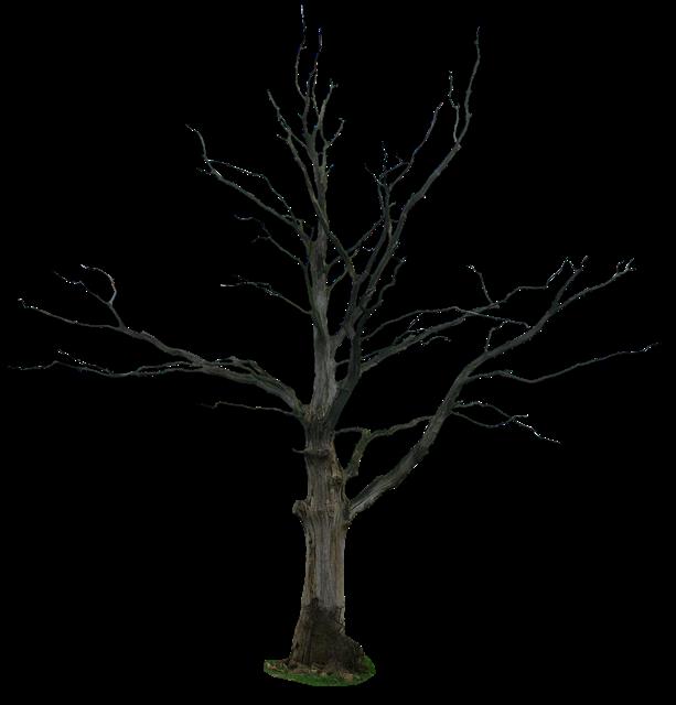 冬季枯枝树木png免抠