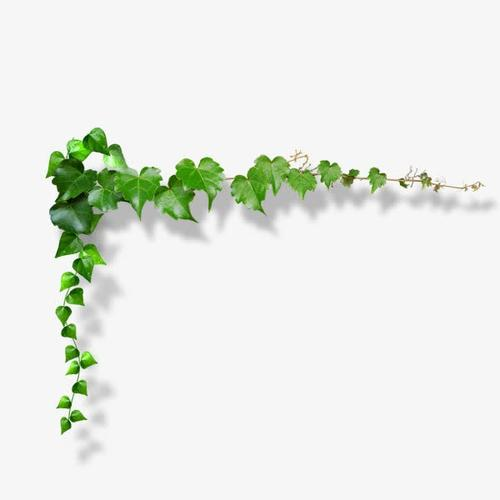 绿色植物藤蔓边框