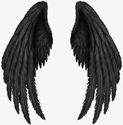 黑色恶魔翅膀羽毛