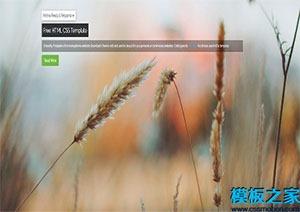 html个人博客网页模板