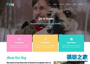 宠物美容网站html网页模板