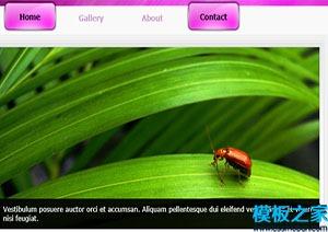 jQuery多页网站模板