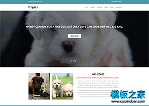 宽屏大气宠物家园网页模板