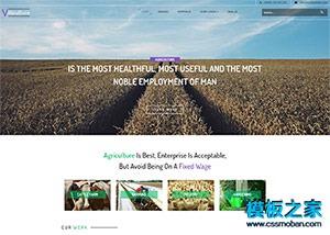 牛奶牧场企业网站模板