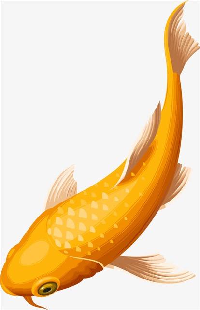 锦鲤可爱动漫图片
