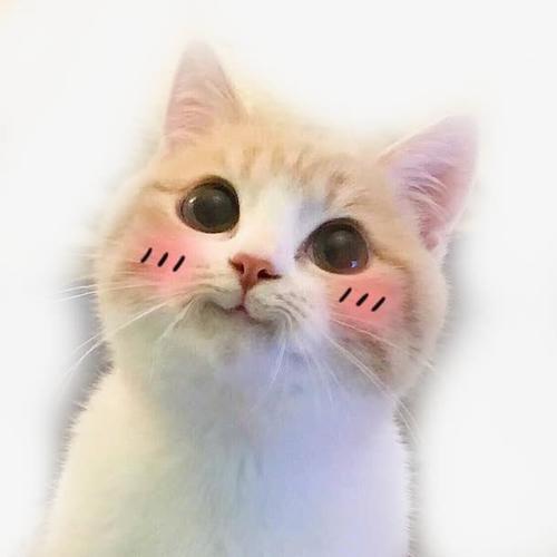 小猫咪脸红卖萌表情包