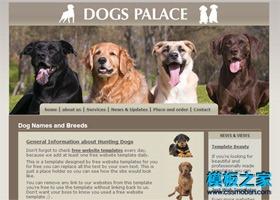 狗狗宠物类通用网站模板