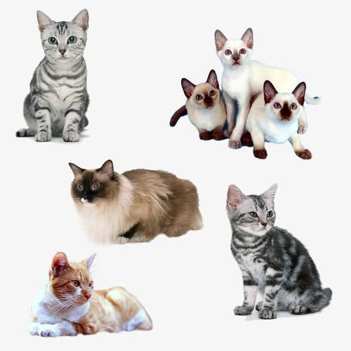 各种猫咪高清免抠